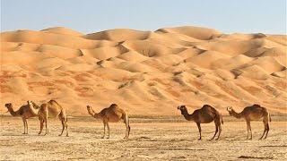 Desert | Know World's Largest Deserts | Amazing Facts & Information About Deserts