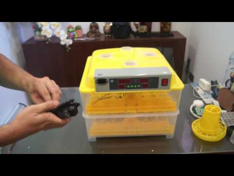 video Portable Incubator (48 | 96 Eggs Capacity) – Electric Powered/Temperature and Humidity Alarm/Automatic Egg-Turning Sensors.