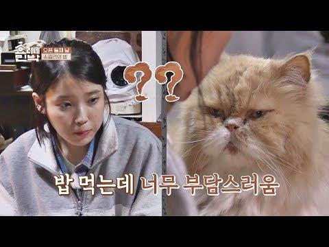 지은 바라기♡ 미미의 뜨거운 시선(!) 내 눈을 바라봐~ 효리네 민박 3회