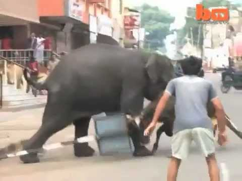 Kerala elephant attack youtube - photo#36