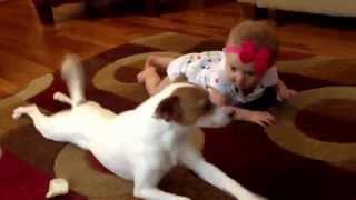 כלב מלמד תינוקת
