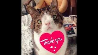 Monty - Special Cat Born With Chromosome Abnormalities - The United Pets