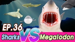[EN] Megalodon is hunting sharks (Zebra, hammerhead, Saw, great white)  collecta [cocostoy]