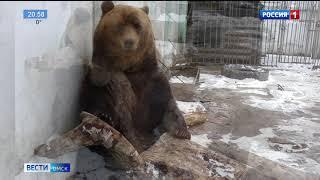 В Большереченском зоопарке проснулся ещё один медведь