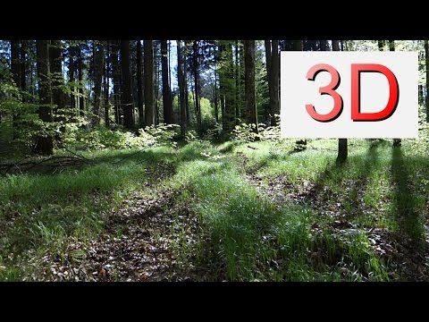 Ultra HD 3D Film: APRIL FOREST WALK (4K Resolution)