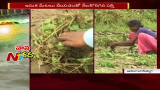 Heavy Rains destroyed Cotton Crop and Ruined Farmers in Adilabad | NTV
