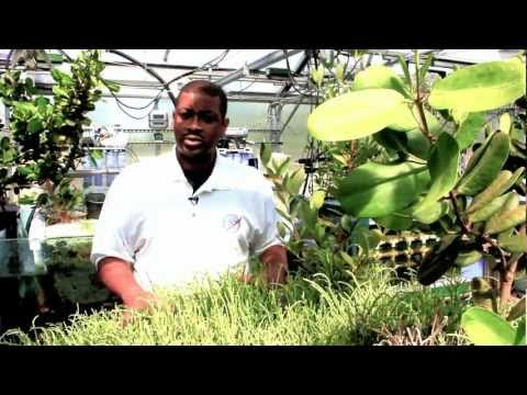 CAREER PROFILE - Alternative Energy/Aviation Biofuels Research ...