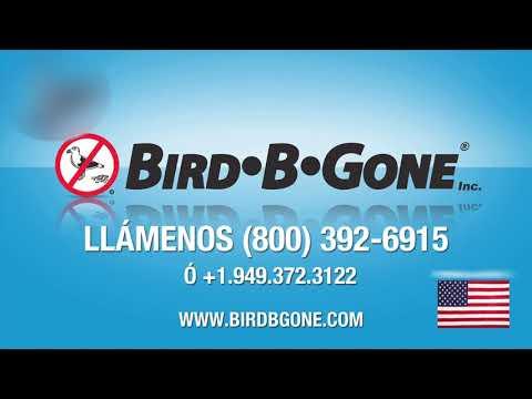 Pinchos para Aves de instalación (Bird Spike Installation)