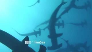 シュモクザメとメジロザメの群れ