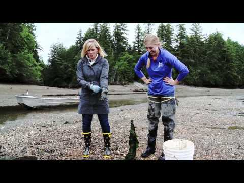 Taylor Shellfish Farms - Clams