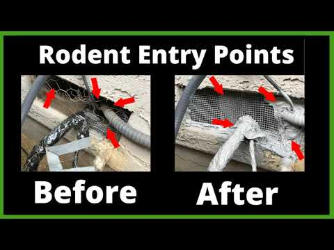 Willow Glen Rodent Control Before & After