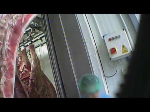 Нелегальная говядина разошлась по Европе photo