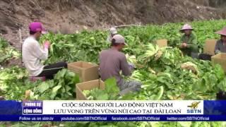 PHÓNG SỰ ĐẶC BIỆT: Cuộc sống cơ cực của người lao động VN lưu vong ở các vùng núi Đài Loan (Phần 2)