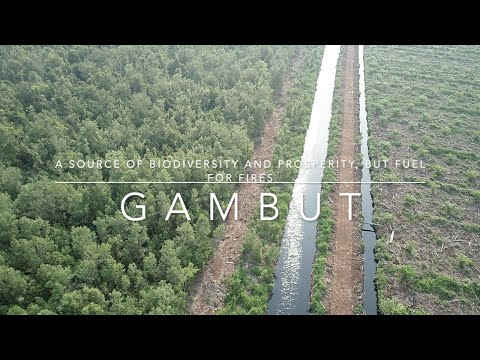 Gambut: a source of biodiversity and prosperity, but fuel for fires