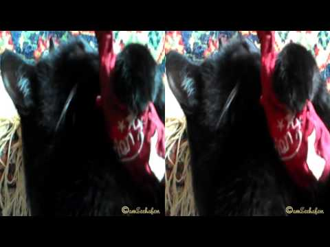 3d stereoscopic video Side by Side black cat kitty kitten schwarze Katze Kätzchen catnip