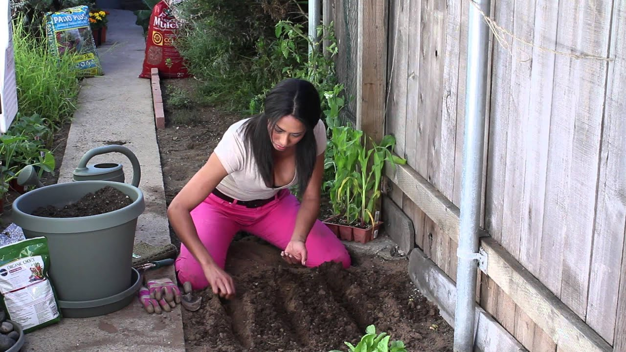 How To Sow Mustard Seeds The Chef S Garden Youtube