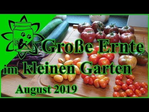 Große Ernte im kleinen Garten | kleine Selbstversorgung Tomaten Zucchini Bohnen Kürbis