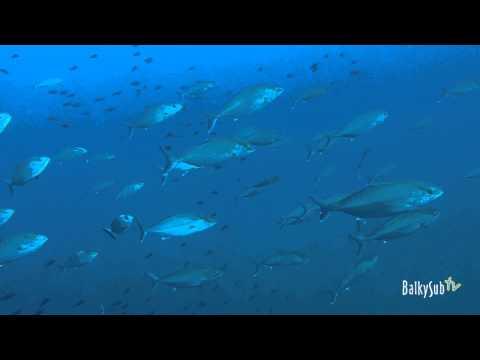 Buceo en el NADIR Cabo de Palos