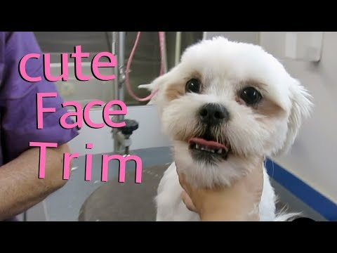 How do you like your dogs face trimmed