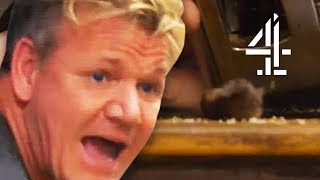 Gordon Ramsay REVOLTED by DEAD MOUSE in Toaster! | Gordon Ramsay's 24 Hours To Hell and Back
