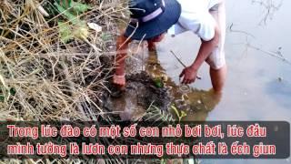 Đi câu lươn và câu phải ếch giun, bạn đã thấy ếch giun bao giờ chưa...