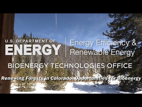 Renewing Forests in Colorado: Opportunities in Bioenergy