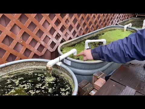 How to Make an Aquarium Siphon aka a U-Siphon