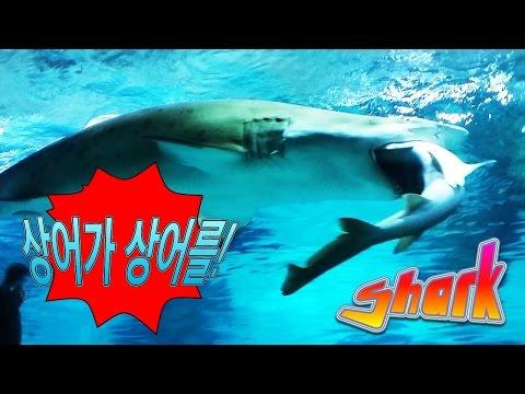 VÍDEO: El increíble ataque de un tiburón que se come a otro en un acuario de Seúl