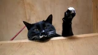 呼ばれた猫が手を上げて応える