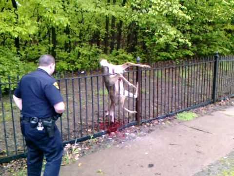 Deer Stuck On Fence Youtube