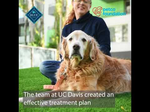 Lauren helped Chance fight cancer just like he had done for her a decade earlier. Thanks to a treatment plan from UC Davis, Chance was able to spend 14 joyful months with his best friend after his diagnosis.