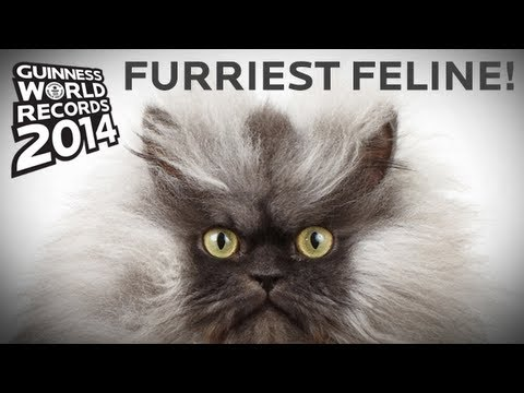 Colonel Meow - Longest Fur On A Cat! Guinness World Records 2014