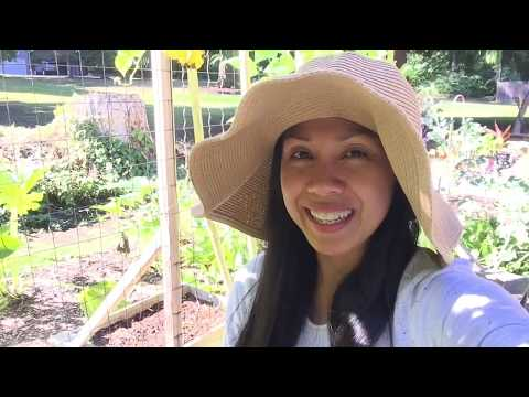 What To Plant For A Fall Vegetable Garden