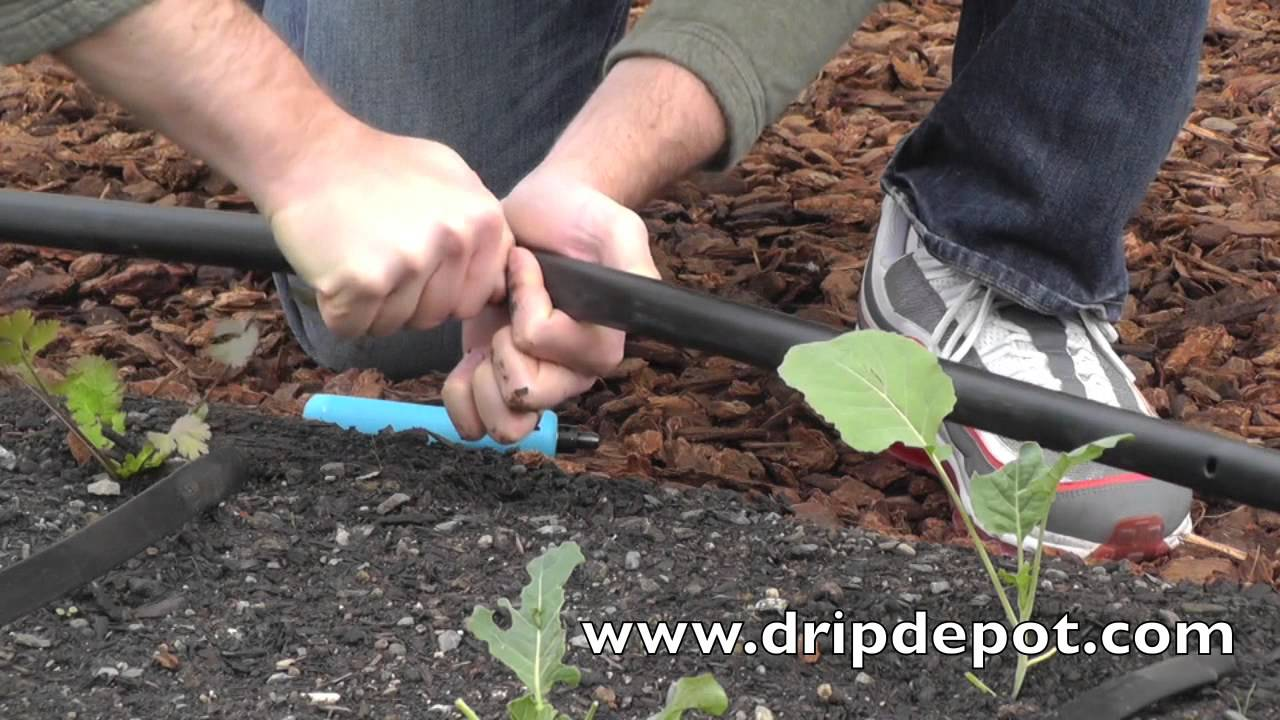 How To Set Up A Drip Irrigation System For Small Farms