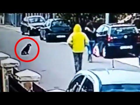 Sumnjivi muškarac je s leđa napao ženu u Podgorici. Ono što je pas lutalica uradio je obišlo svijet!