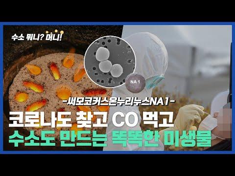 [수소뭐니?머니!]코로나 꼼짝마! 일산화탄소도 먹고, 코로나도 ...