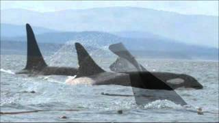 DANCE OF THE ORCA