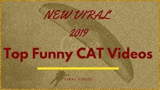 New TOP  FUNNY Video CATS  funny Compilation -  CATS FAILS 2019