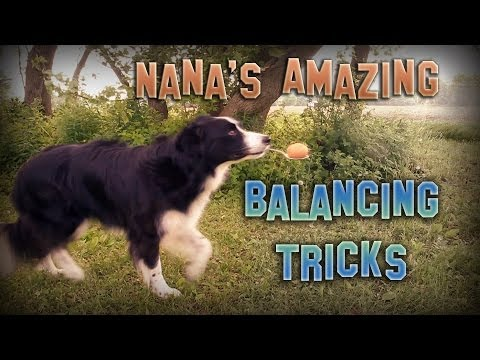 Dog Can Perform Amazing Balancing Tricks