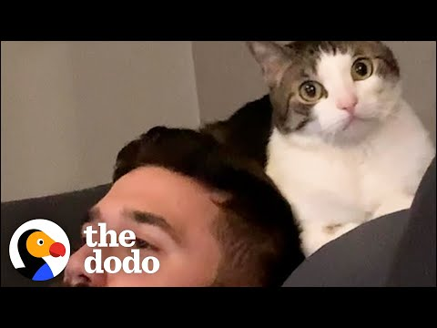 Woman Becomes Third Wheel In Her Cat And Husband's Relationship | The Dodo Cat Crazy