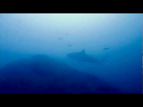 Twin Tiger Sharks at Cocos Island
