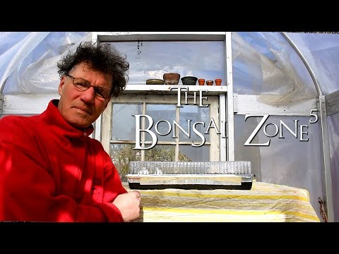 Bonsai Work in the March Break, Part 3, The Bonsai Zone, March 2018