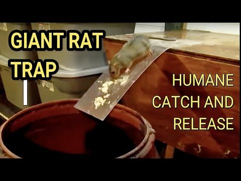 Diy Humane Mousetrap Green Rat Trap For Capture And