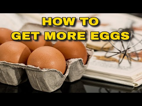 GET MORE EGGS DURING THE WINTER MONTHS - SIMPLE AND CHEAP METHOD