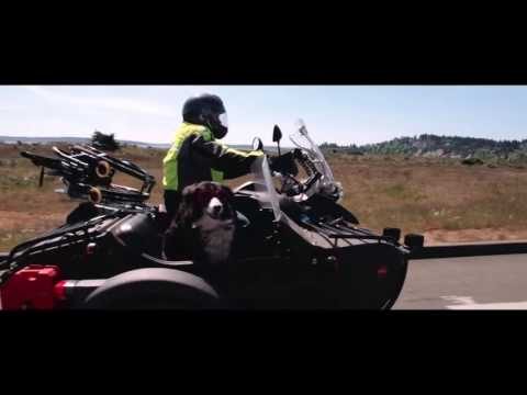 Sit Stay Ride The Story of America's Sidecar Dogs   Official Trailer
