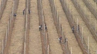 Chuyện kể bên trong Bắc Triều Tiên