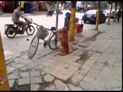 Pas čuvar  bicikla