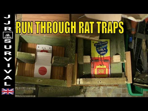 Run Through Rat Traps