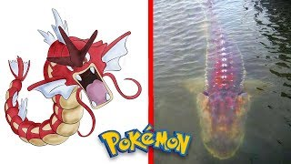 15 Pokemon Characters Caught In Real Life!