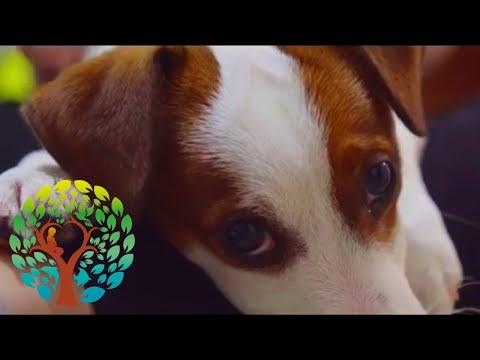 Sirviendo con los Canes: Capítulo 2 – 19/11/2020